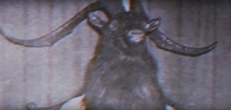 Muncul orang yang menggunakan penutup kepala kambing.