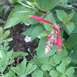 Gardening 2013 - IMG_20130414_102400.jpg