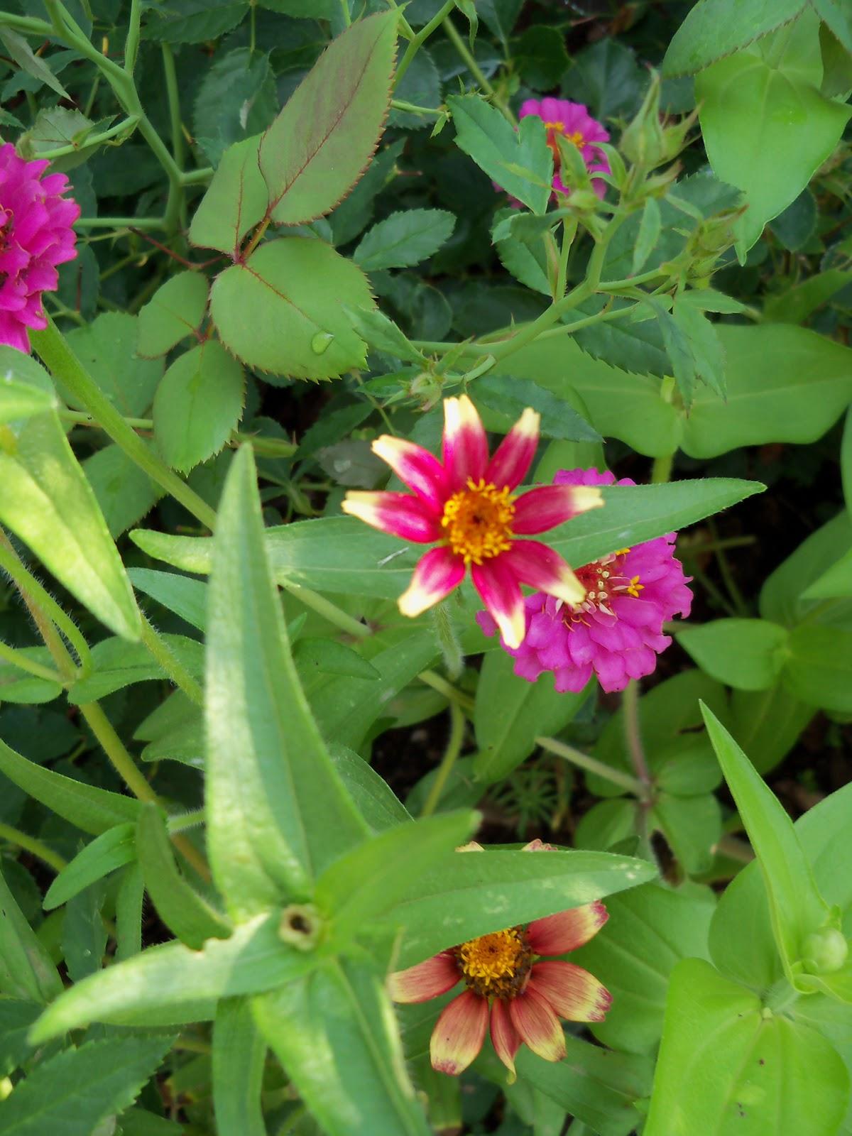 Gardening 2010, Part Two - 101_3301.JPG