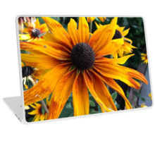 Rudbeckia laptop