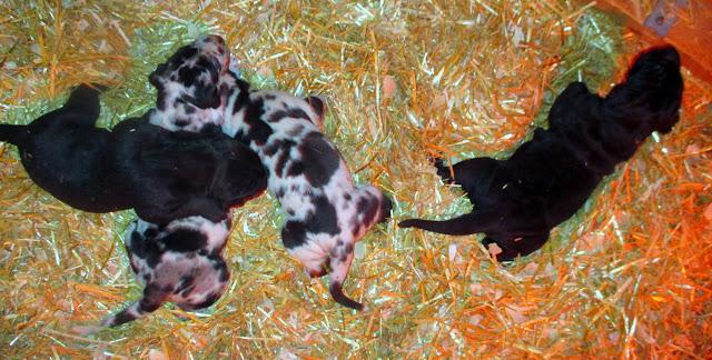 Savanna's babies @ 2 weeks