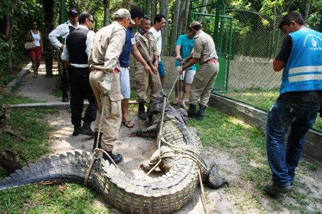 Questões e Fatos sobre Crocodilianos gigantes: Transferência de debate da comunidade Conflitos Selvagens.  - Página 3 4%252C43m