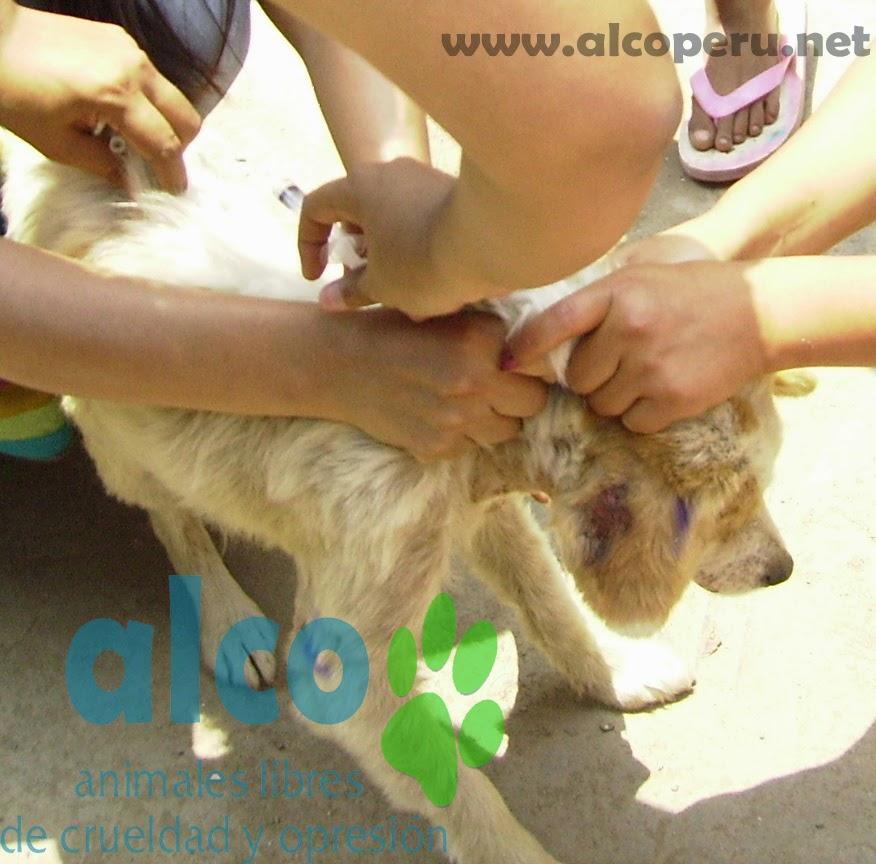 Campaña de asistencia en Mangomarca SJL (8)