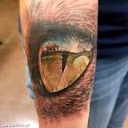 olho de tigre com reflexo de elefante.jpg