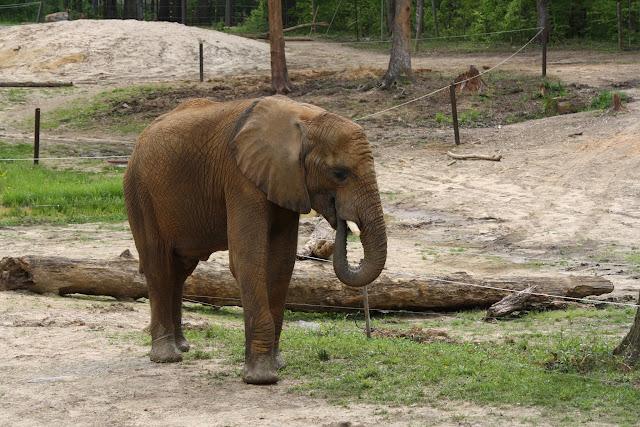 Zoo Snooze 2015 - IMG_7278.JPG