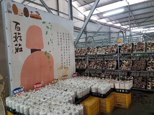 10D9N Taiwan Trip: Mushroom Farm, Taichung