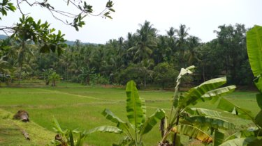 The lush greenery of Kerala,India