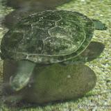 03-11-15 Dallas World Aquarium - _IMG1005.JPG