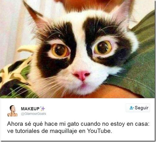humor twits de gatos (14)
