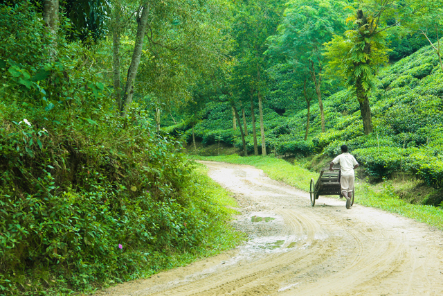 Road through the tea plantations at Srimangal. ©Photo Credit: Baundule Omor