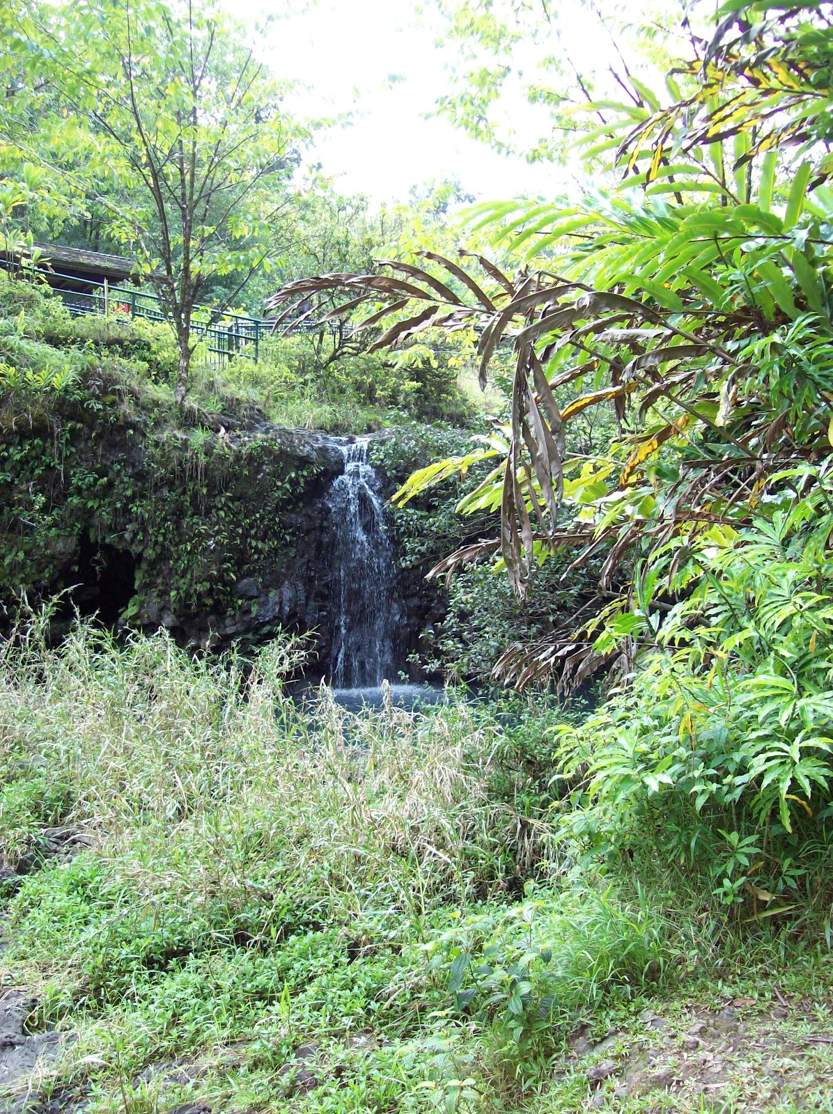 Hawaii Day 5 - 100_7423.JPG