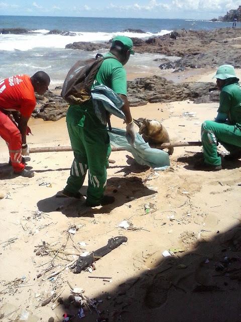Funcionários da Limpurb recolheram o golfinho