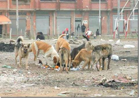 Animales SOS dice que 80% es irresponsable con su perro en El Alto