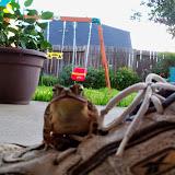 Gardening 2014 - 116_3015.JPG