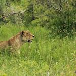 Zuid Afrika Kruger Park
