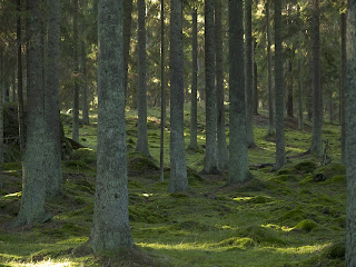 mossa mellan trd