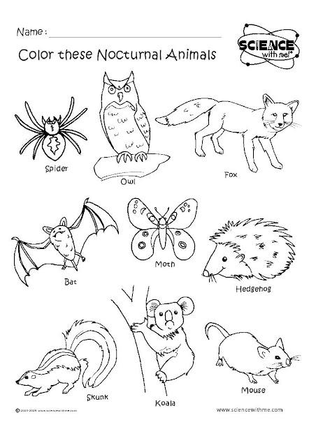 Angol Feladatok Mondkk Sznezk Nocturnal Animals  Jszakai Llatok   Fun Coloring Pagesanimal Coloring Pagesforest
