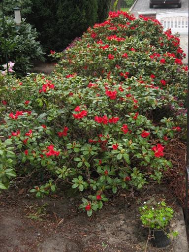 f f flo het grote bloemen en planten in eigen tuin. Black Bedroom Furniture Sets. Home Design Ideas
