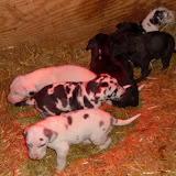Serena's babies @ 4 weeks