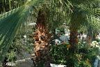 Фото 12 Derin Hotel