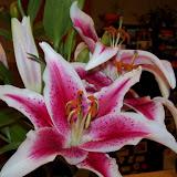 Bouquets - 101_0098.JPG
