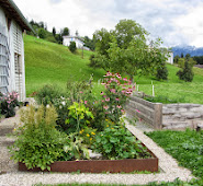Schönstes Foto Blumenbeet Stall neuIMG_0719.JPG