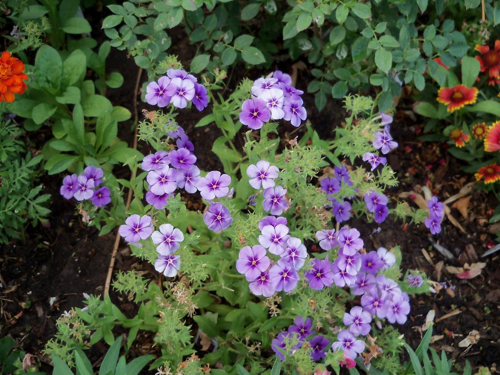 Gardening 2011 - 100_8858.JPG