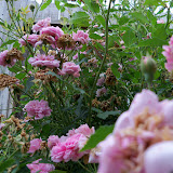 Gardening 2012 - 115_2000.JPG