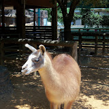 Houston Zoo - 116_8535.JPG