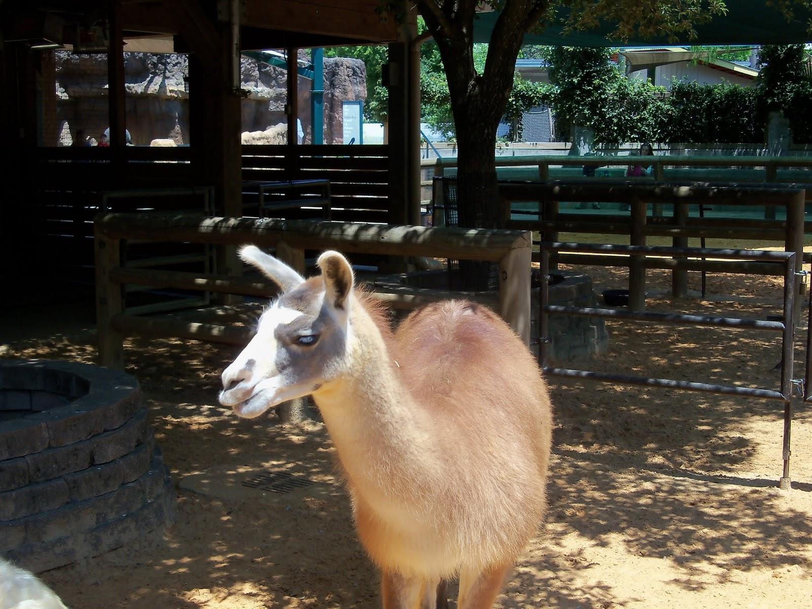 Houston Zoo - 116_8535.JPG
