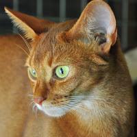 gatti 2012/5