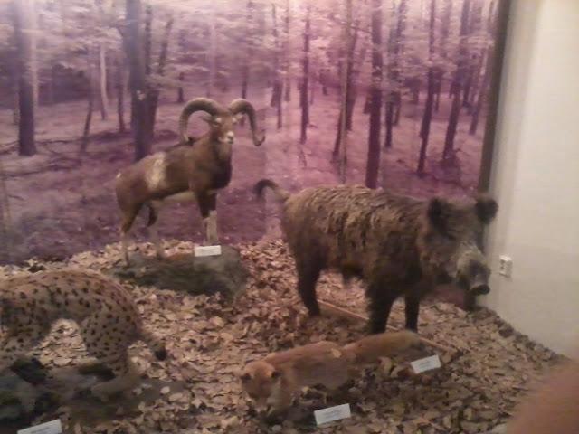 Múzeum - 2012-09-01%2525252015.50.57.jpg