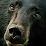 Linda Roberts-Sailer's profile photo