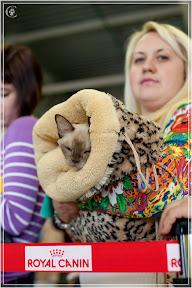 cats-show-24-03-2012-fife-spb-www.coonplanet.ru-084.jpg