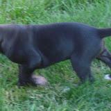 Lucian @ 4 weeks