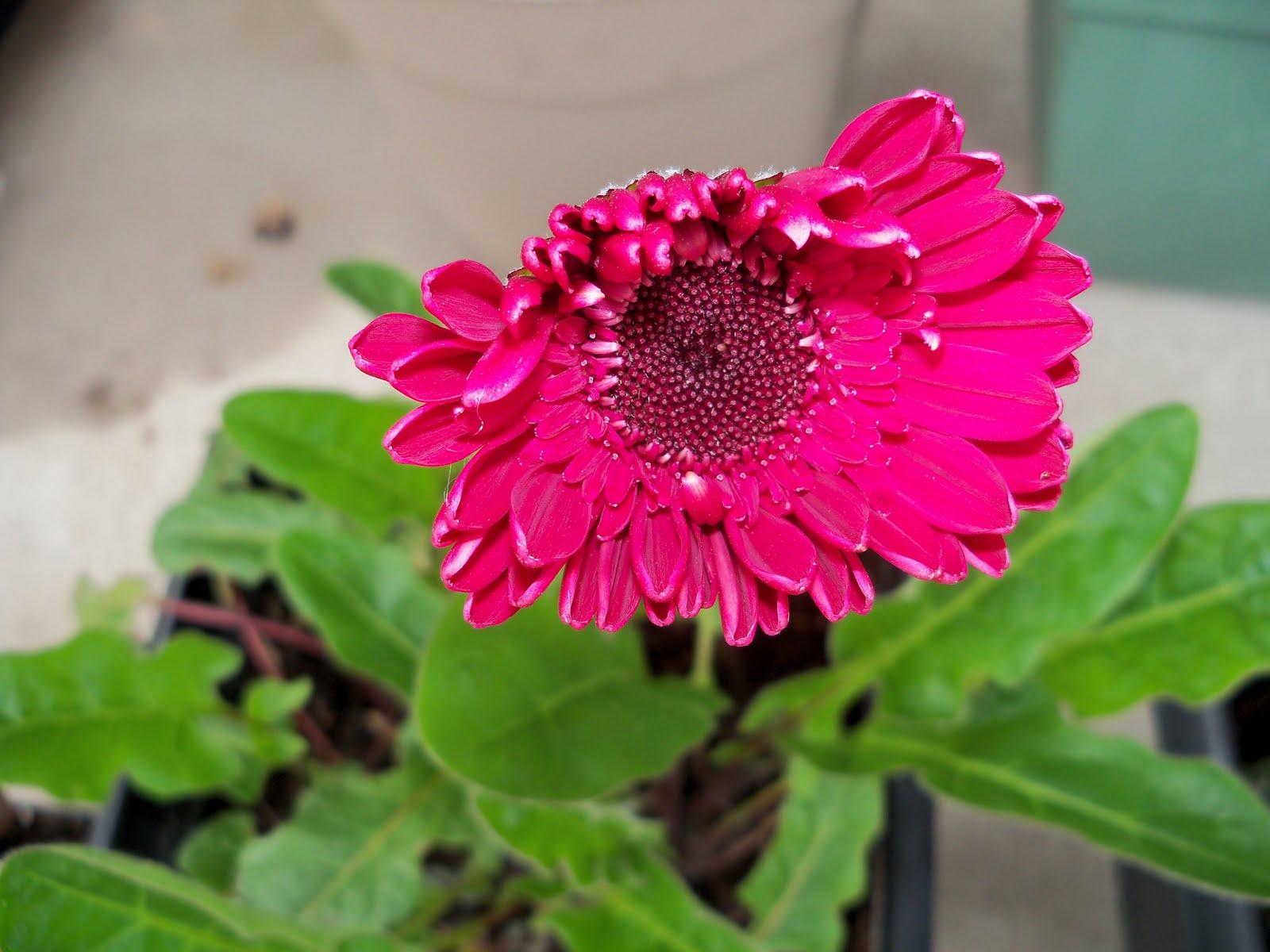 Gardening 2010 - 101_0363.JPG
