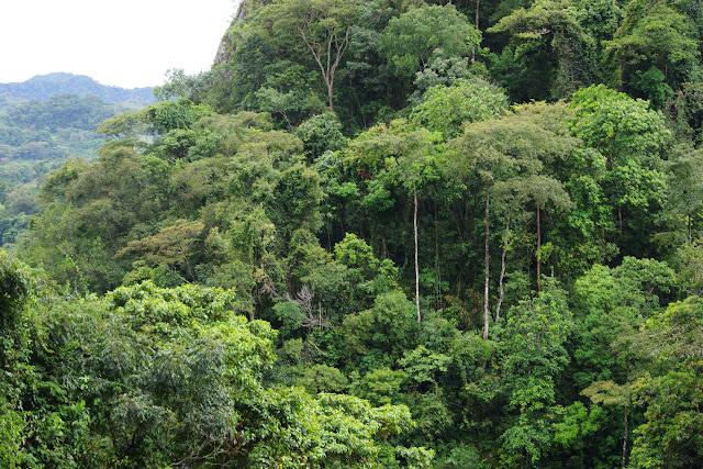 Sendero Ecológico La Virgen de La Peña, El Morro, 640 m (Casanare, Colombie), 6 novembre 2015. Photo : J.-M. Gayman