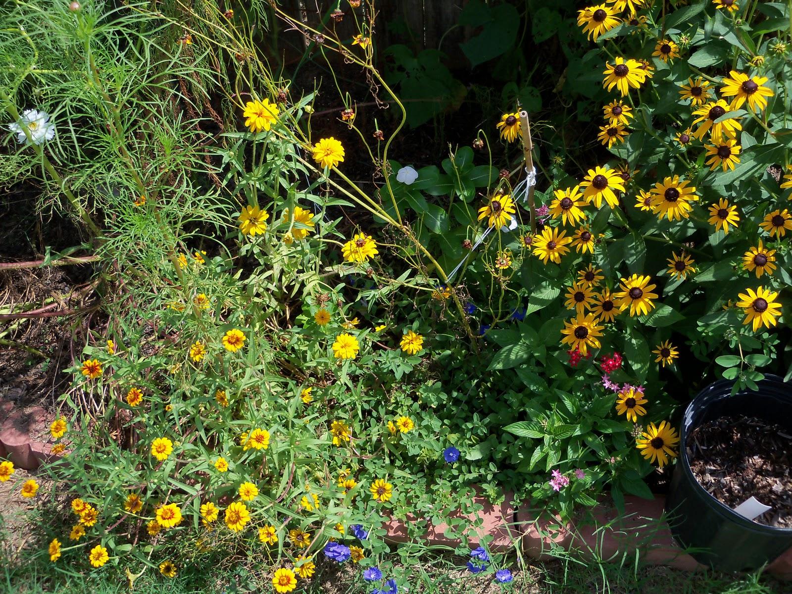Gardening 2010, Part Three - 101_5113.JPG