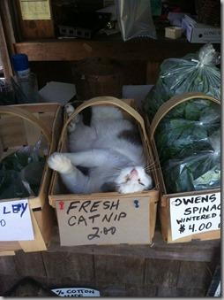 fresh catnip 2