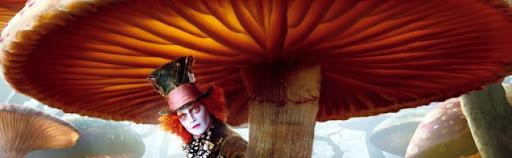 El sombrerero y los hongos