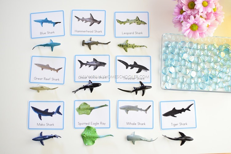 FREE Shark Matching and Fact Cards