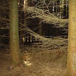 blandet 2008 Marts 046.jpg