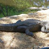 04-07-12 Homosassa Springs State Park - IMGP0040.JPG