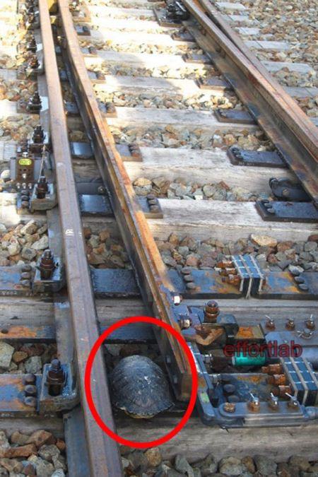 terowong-kura-kura-lintas-landasan-keretapi