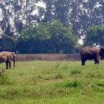 chattbir zoo elephants.jpg