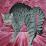Tierschutz-Blog's profile photo