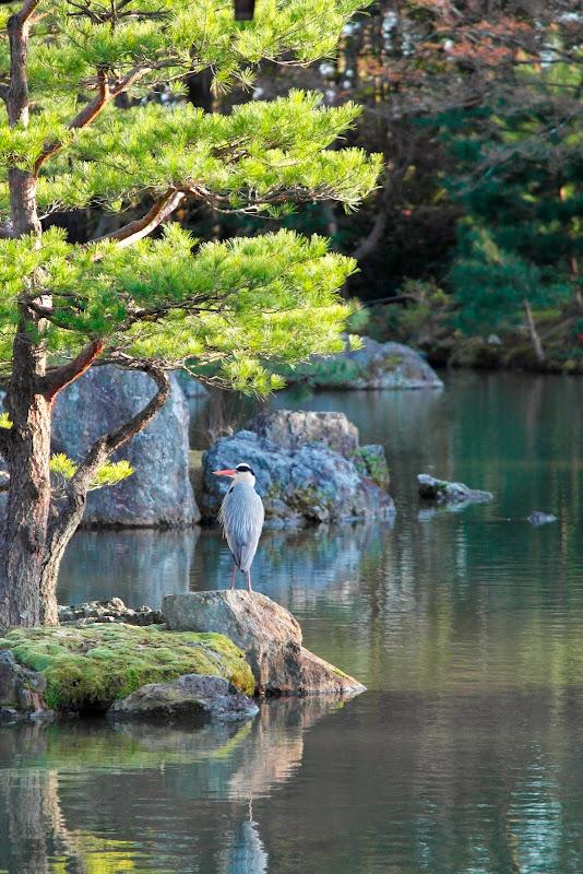 2014 Japan - Dag 8 - janita-SAM_6485.JPG