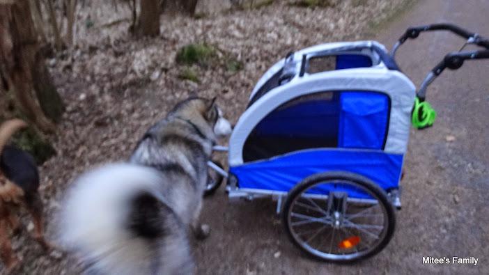 Modes de transport pour petits / vieux chiens qui fatiguent vite - Page 3 DSC02424