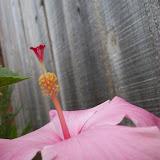 Gardening 2009 - 101_4450.JPG
