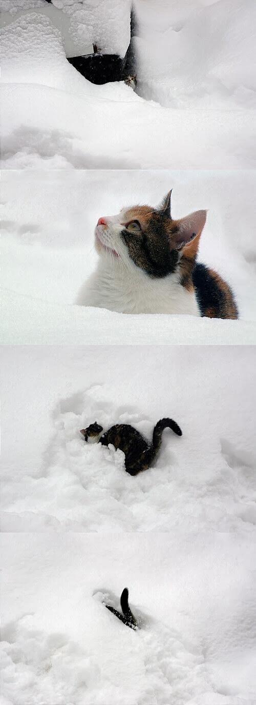 「恋人といる時の雪って特別な気分に浸れて僕は好きです」「雪と聞いていたのでホテルに泊まりました」関東大雪で今年もリア充画像が話題に